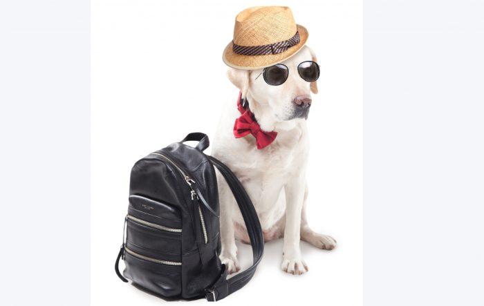 犬は引っ越しの届出が必要