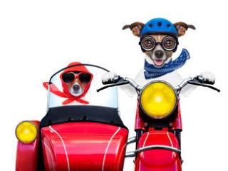 バイクを輸送するときの注意点