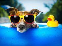 畜犬登録の住所変更ほか引越し手続きチェックリスト一覧