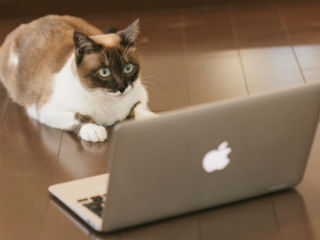 パソコンを見つめる猫│プロバイダの移転方法とは?